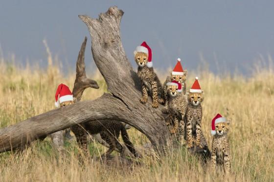 Kosen safaris packages travel with us and experience the wonders