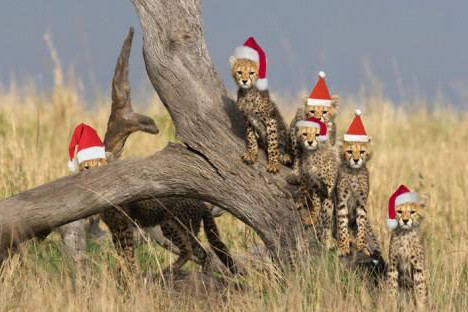 Christmas in the Wilds of Africa